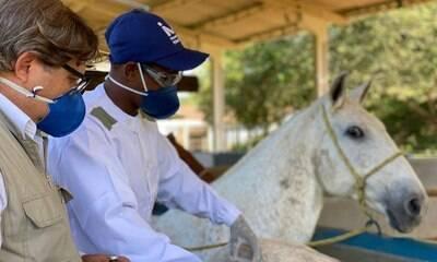 Soros de cavalos têm anticorpos 100 vezes mais potentes contra Covid-19