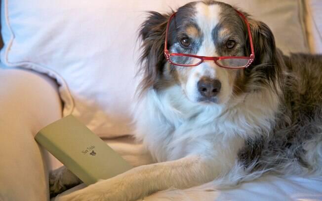 Um cão adulto da menos trabalho e se adapta rapidamente ao novo lar
