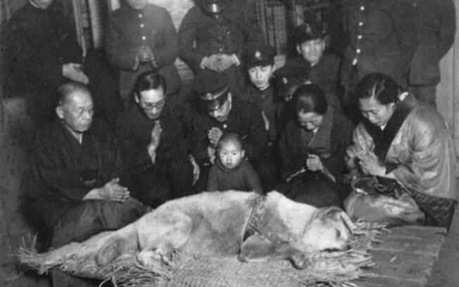 Hachiko antes de ser enterrado, 1935.