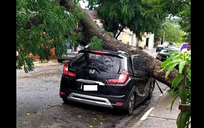 Chuva derruba árvores e causa pontos de alagamento na RMC