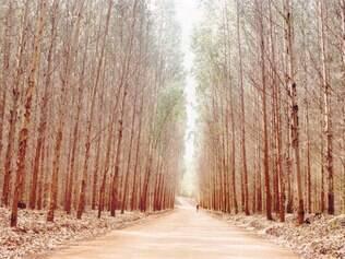 Atividade-fim. Ação da Cenibra, pelo direito de terceirizar reflorestadores, ampliou o debate sobre proibição de terceirizações