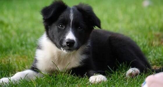 Confira dez motivos para você adotar um cachorro
