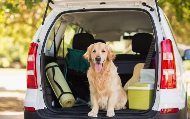 Planejar uma viagem de carro com cachorro pode não ser muito difícil