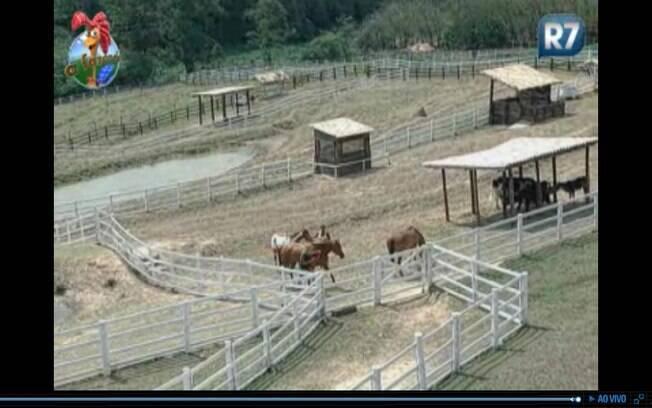 Monique e Valesca buscam os cavalos no pasto