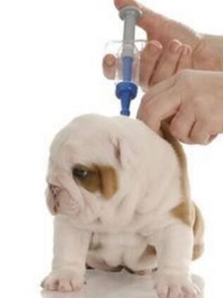 A aplicação de vacinas para cachorro são recomendadas na fase filhote do animal