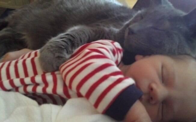 Gatos que gostam de dormir em cima das pessoas