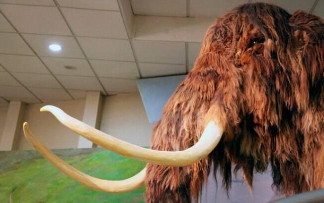 Além de fazer um centro semelhante ao Jurassic Park, cientistas desenvolverão híbrido de mamute lanoso e elefante