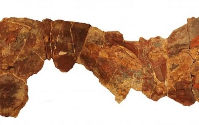 Fóssil do antigo tubarão foi encontrado em região desértica do país africano.
