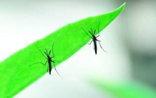 Agência da ONU cogita energia nuclear para combater Aedes aegypti - iGVigilante - iG