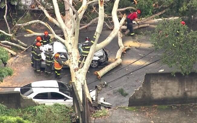 Queda de árvore na tarde desta terça-feira (1º) em São Paulo