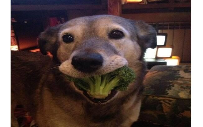 Brócolis é um dos alimentos indicados para cães