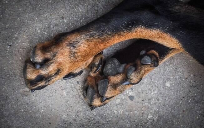 Como qualquer outra parte do corpo, as patas de cachorro também precisam de atenção e cuidados, principalmente se existe o quinto dedo nos pés de trás