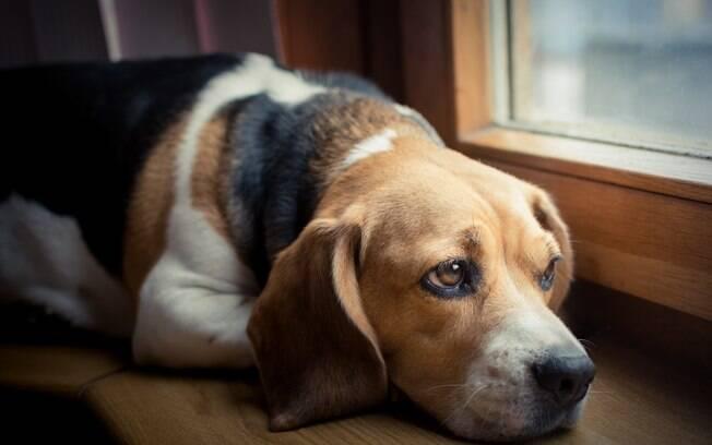 O tempo que você passa no celular pode estar deixando seu cachorro triste