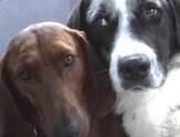 Cadela recusa adoção ao saber que melhor amigo não iria junto