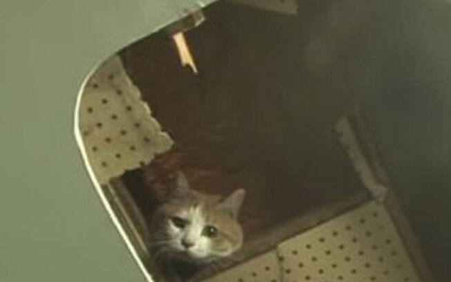 O gato vivia dentro das pardes do shopping