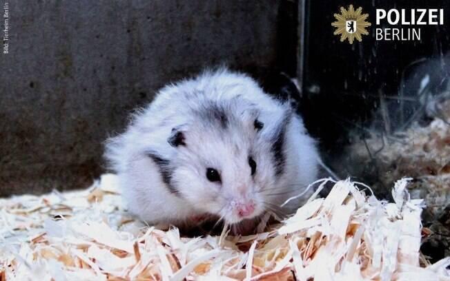 Policiais acham hamster e agora ele os ajuda a combater o crime!