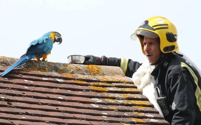 Papagaio que fala palavrão é resgato por bombeiros em Londres