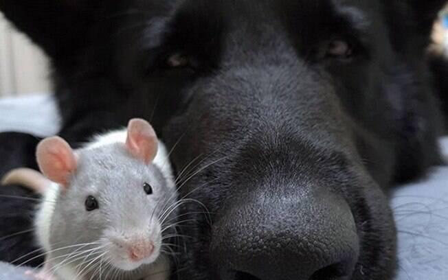 Nuka e Blue construíram uma amizade improvável