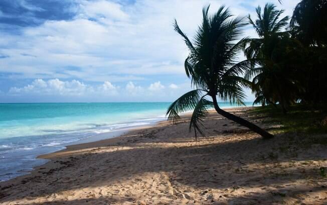 Praia de Maragogi tem areia fina, coquerais e águas claras