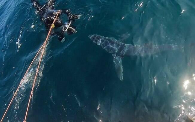 Tubarão ficou a centímetros de mergulhadores na costa do Reino Unido