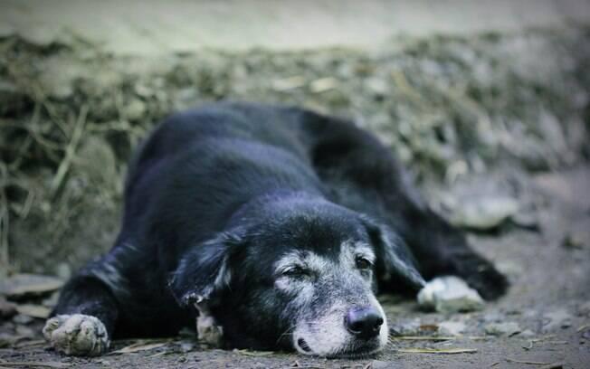 Artrite e artrose em cachorro são problemas típicos da velhice, mas pode ser prevenida e tratada com algumas dicas