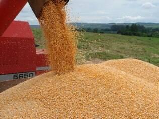 O preço do milho esteve em baixa no mês de maio, e a tendência é que a baixa permaneça nos meses de junho e julho