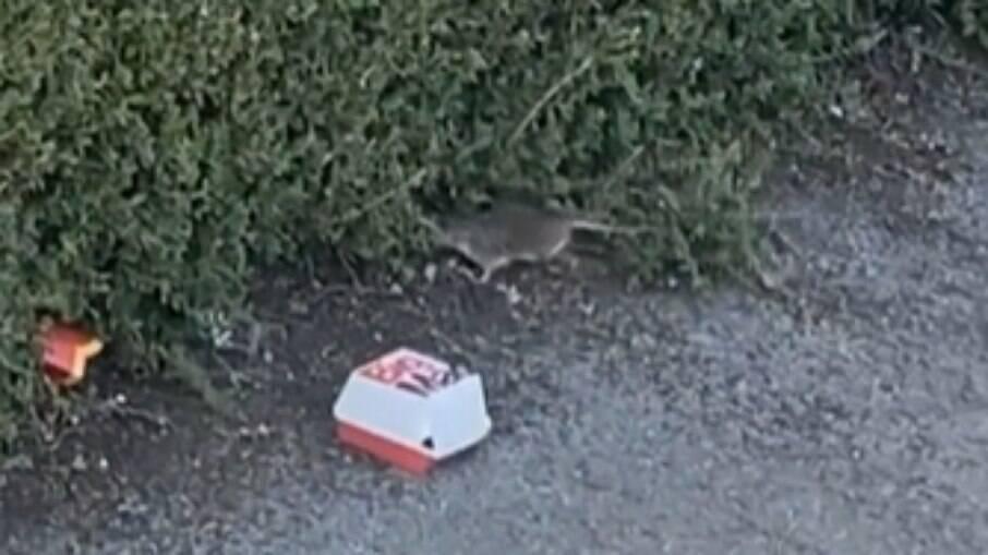 Rato se assusta e larga  caixinha do McDonald´s