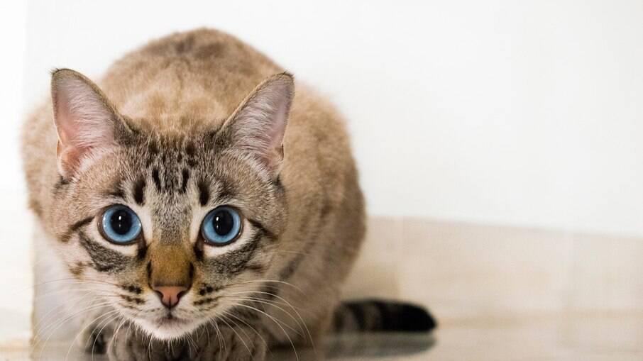 Olhos de gato e suas curiosidades
