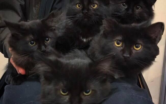 Os seis filhotes de Usagi