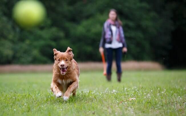 À medida que o canino vai aprendendo a te obedecer e respeitar os comandos, pode começar a levá-lo a parques maiores, com mais pessoas e cães