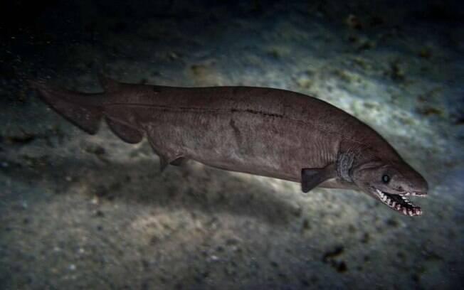 Fóssil do ancestral do tubarão foi encontrado por biólogos suíços.