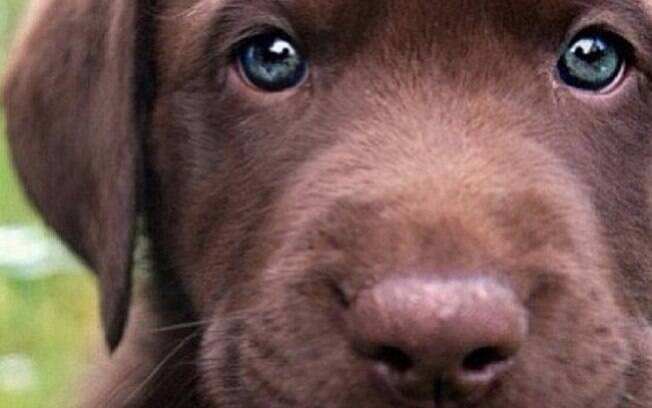 Os animais são tratados pela lei brasileira como se fossem objetos