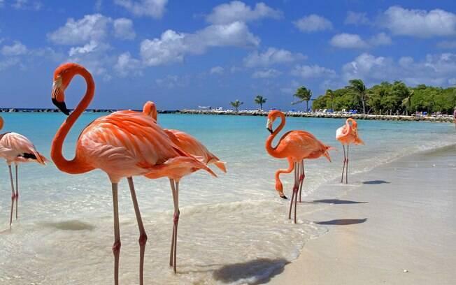 Aruba é considerada a ilha mais ensolarada do Caribe