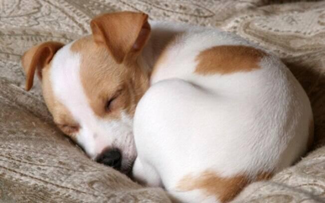 Cachorrinho dormindo