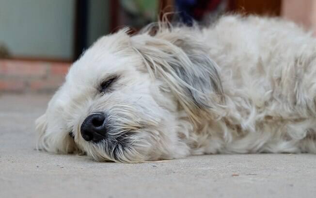 A epilepsia canina é uma realidade para muitos pets, mas o tratamento é simples de ser feito