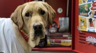 Conheça Capitão, o cão que ajudará ex-militar com deficiência