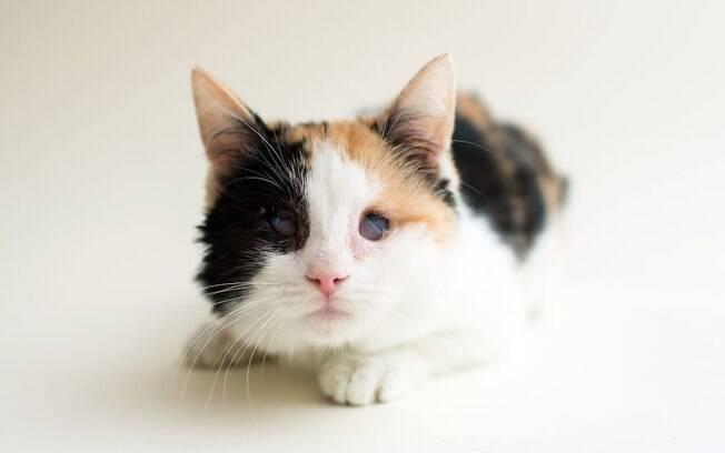 Ember Darkmoon foi resgatada de uma casa depois que seu dono morreu, ela tinha uma grave doença no olhos.