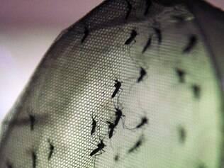 Agência de notícias destacou recorde de casos de dengue em São Paulo
