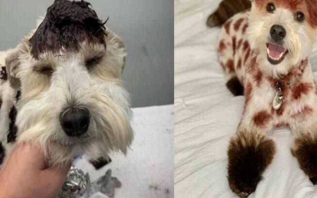 Cãozinho como girafa