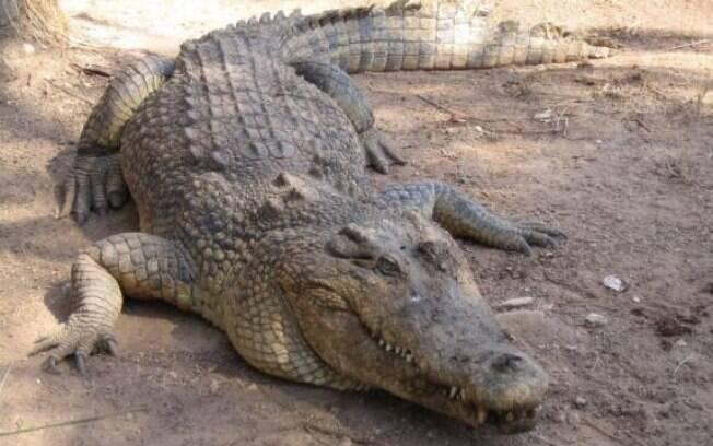 Você vai se surpreender com a lista dos maiores animais do mundo. Até crocodilo pode ser!