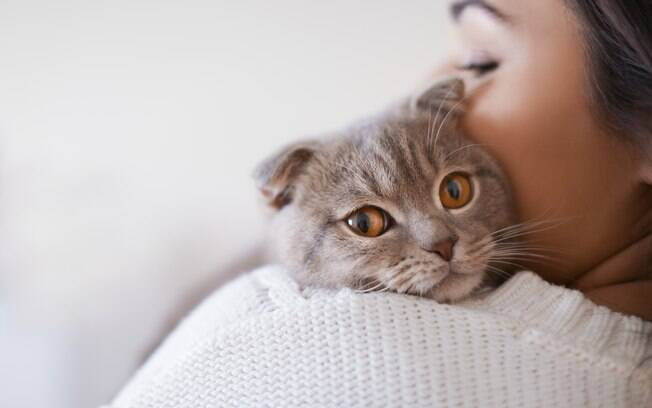 Gatos amam seus donos na mesma intensidade que os cães