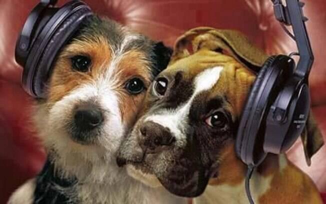 Música tem o poder de tranquilizar o cachorro, assim como os seres humanos