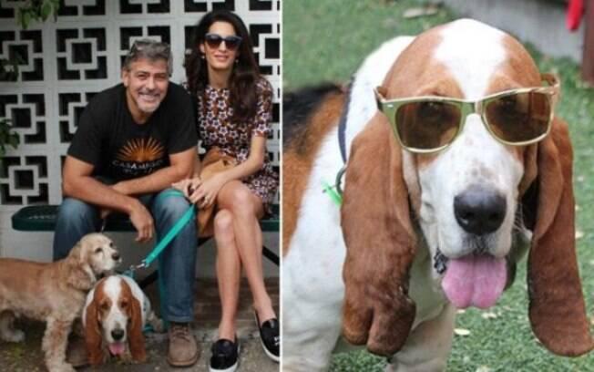 Ator George Clooney doa mais de 40 mil reais para ajudar cães resgatados