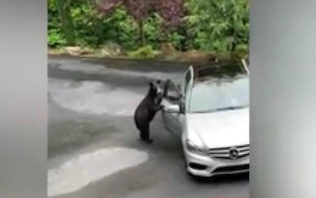 Urso abriu a porta do carro e apavorou os donos