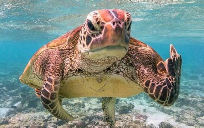 Foto de tartaruga