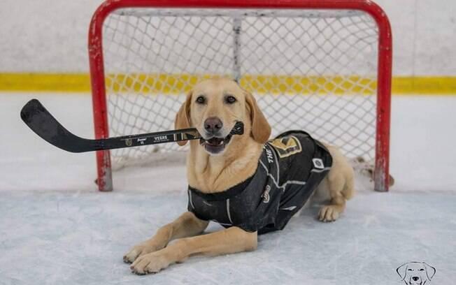 O Labrador Benny, de cinco anos, está há mais de um ano aprendendo a patinar e suas habilidades já impressionam