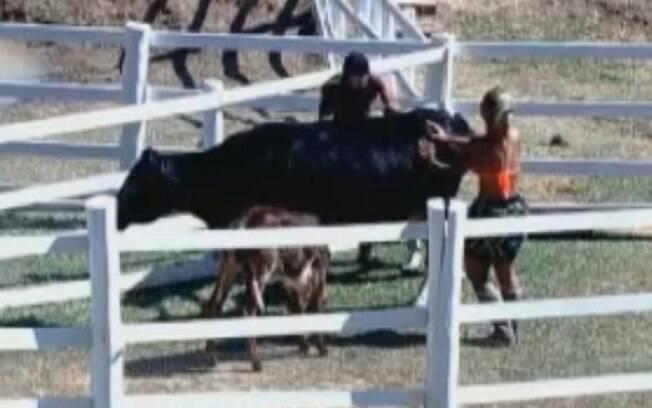 Os três peões sofreram para empurrar a vaca Preta