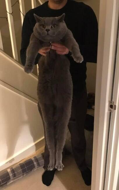 gato Winston