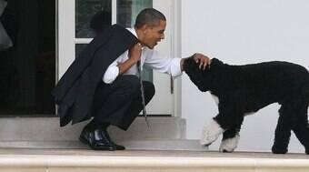 Cão de Barack Obama morre e ganha tributo do ex-presidente