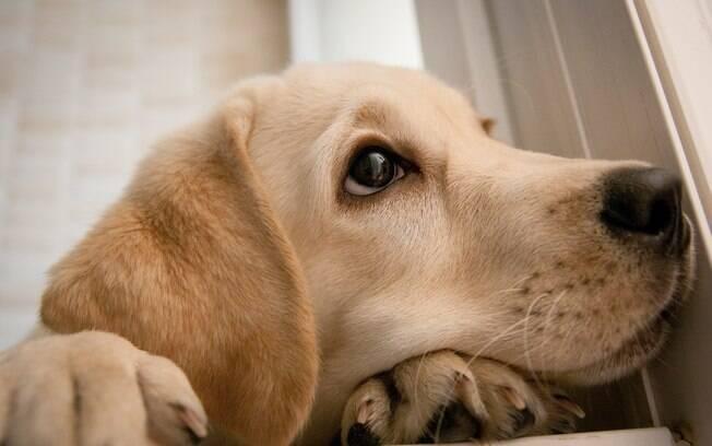 Pets podem ficar mais estressados e ansiosos durante o período de isolamento